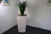 Foto: plant in bak gemummificeerd